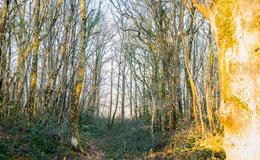 lien vers la page Forêts