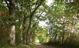 lien vers la page Sentiers de randonnée